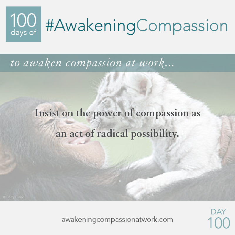 Insist on the power of compassion as an act of radical possibility.