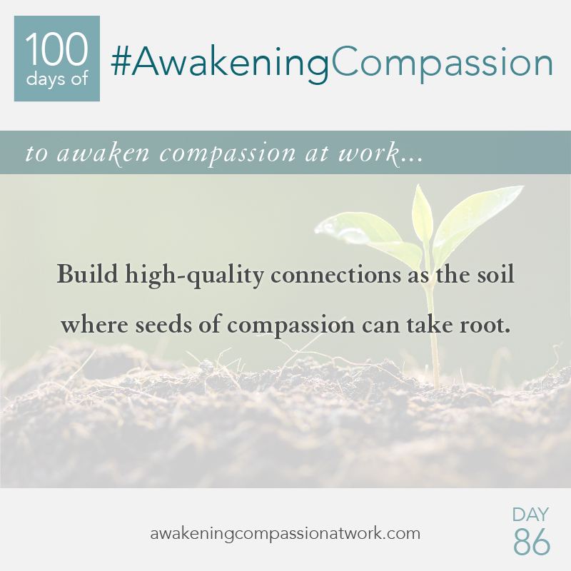 Build high-quality connections as the soil where seeds of compassion can take root.