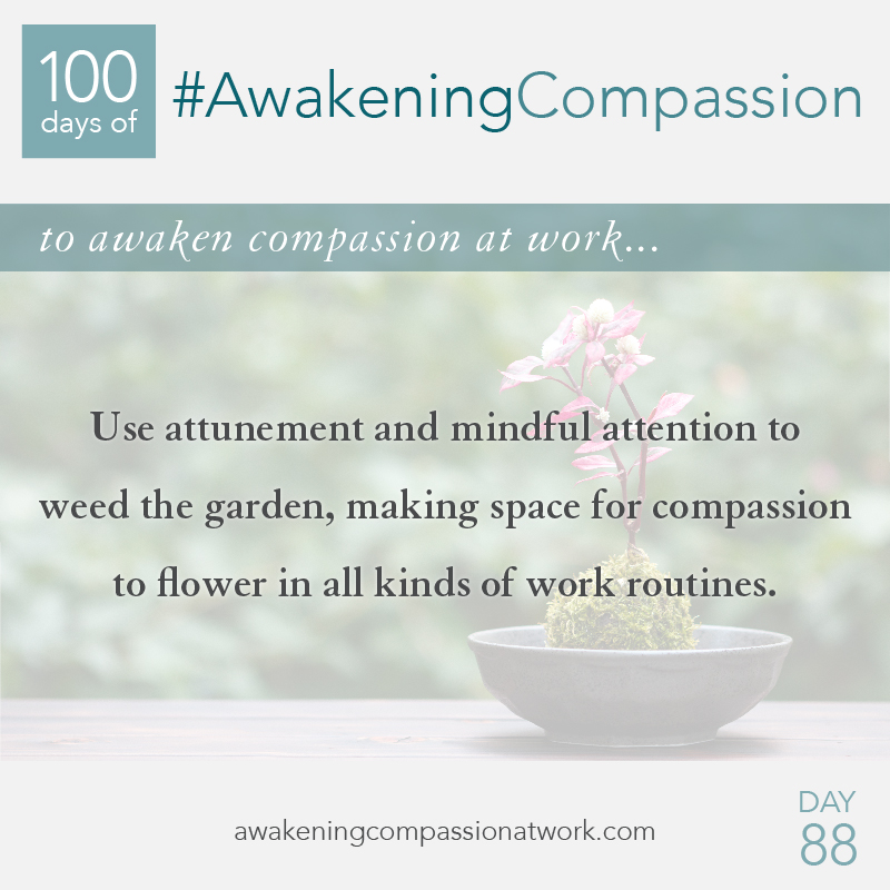Use attunement and mindful attention to weed the garden, making space for compassion to flower in all kinds of work routines.