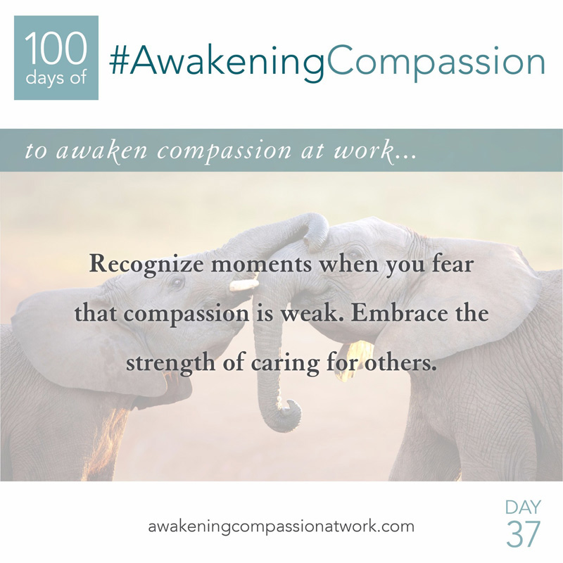 Recognize moments when you fear that compassion is weak. Embrace the strength of caring for others.