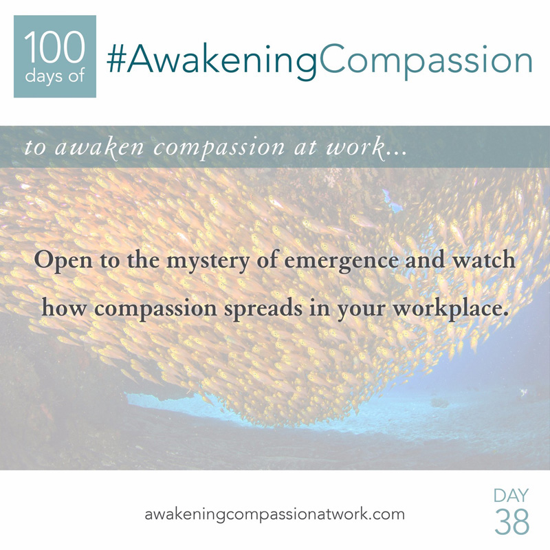 Open to the mystery of emergence and watch how compassion spreads in your workplace.